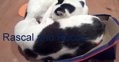 Sandy Toes Creations: Meet Rascal and Rocco, funny crazy cat blog!