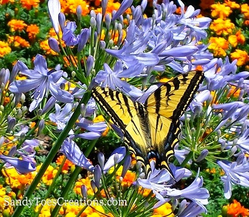 #Beautiful #Butterfly at #GilroyGardens #nature #beauty
