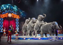 40% OFF Ringling Bros & Barnum & Bailey in the Bay Area