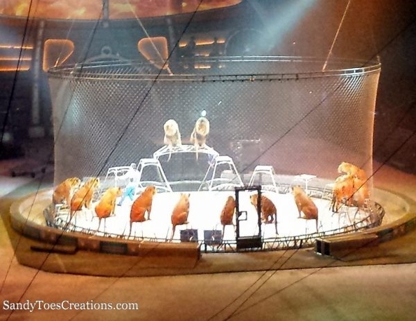Circus Tigers and Lions at Out of This World Ringlingbros