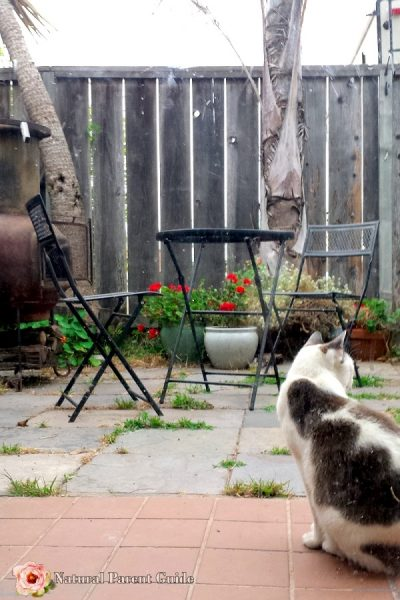 cat in courtyard