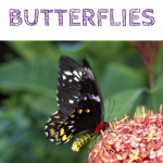 Books to Learn about Butterflies