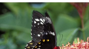 Learn about butterflies, butterfly migration, caterpillars, with natural science books for your homeschool curriculum or curious kids | butterfly books | kids books | education