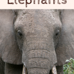 Kids Books About Elephants