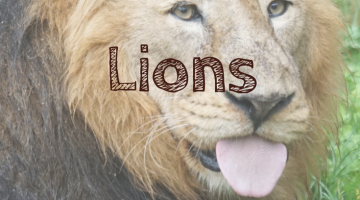 Favorite Kids Books Featuring Lions #whattoread