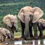 Stop the Extinction of Elephants #MondayMatters