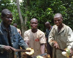 Cocoa Farmers in Ghana. Choose better chocolate this Halloween for all those trick-or-treaters in halloween costumes at your door. Support fair trade companies